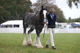 HOY_220314_Clydesdales_2377