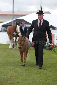 Canty_A_P_121114_All_breeds_0702