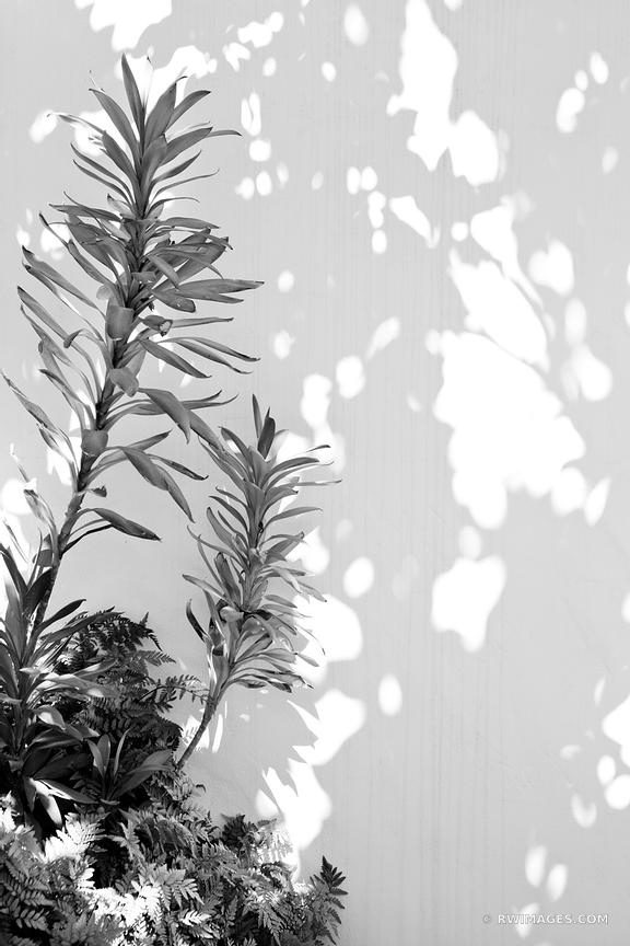 BOTANICAL BLACK AND WHITE SANTA BARBARA CALIFORNIA