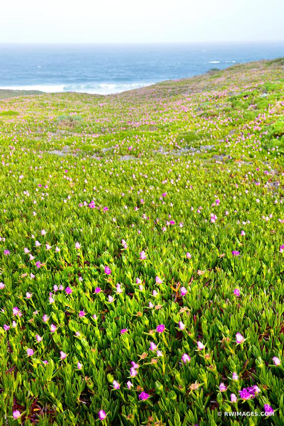 SPRING WILDFLOWERS POINT REYES BEACH NORTH