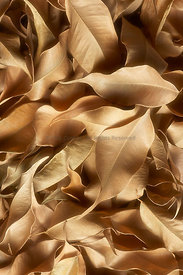 Overlapping dried leaves