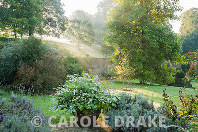 Morning sunlight streams down the valley side into the garden. Mapperton House, Beaminster, Dorset, UK
