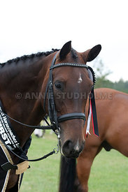 SI_Dressage_Champs_260114_404