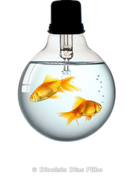 Aquarium lamp with red fish
