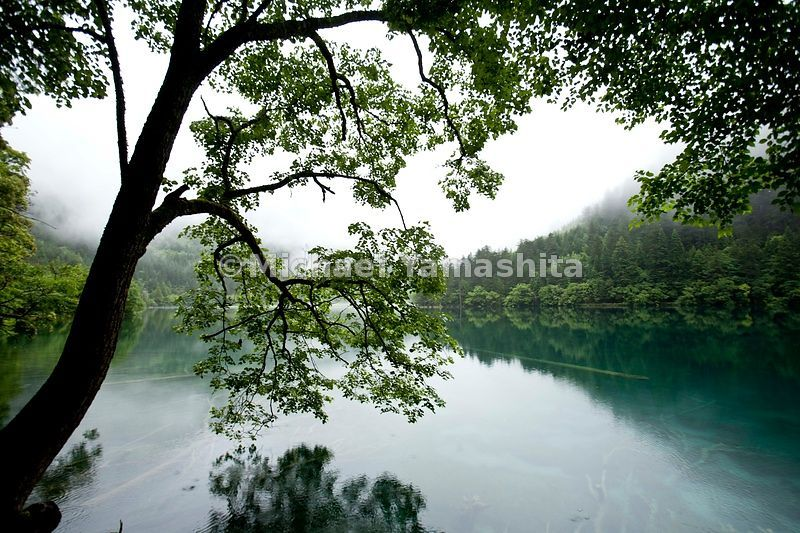 Jiuzhaigou in Spring. Mirror lake at dawn in the rain.