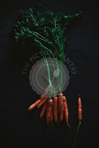 A carrot with stalk on a black background