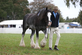HOY_220314_Clydesdales_2378