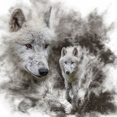 Art-Digital-Alain-Thimmesch-Loup-12