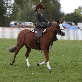 Side Saddle HOY photos
