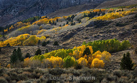 Turning Aspen Groves