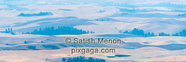 Wheat Fields and Trees, Palouse Region, Washington, USA