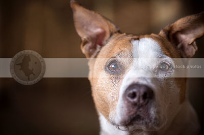 bullies ~ pits & crosses photos