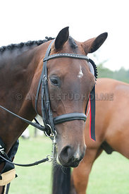 SI_Dressage_Champs_260114_405
