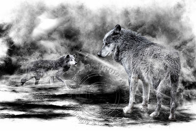 Art-Digital-Alain-Thimmesch-Loup-33