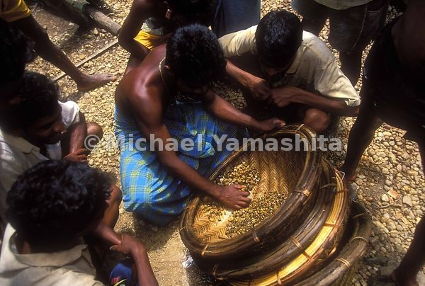 Precious stones are sieved and sorted before being sent to nearby Ratnapura for cutting and polishing.