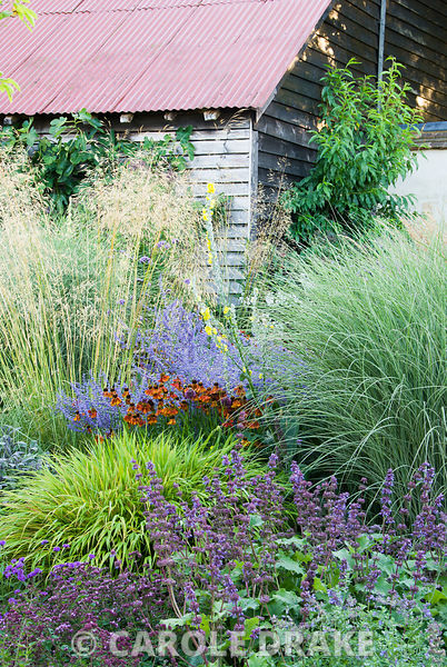 Colourful clumps of Hakonechloa macra 'Alboaurea', salvia, Origanum vulgare, Helenium 'Moerheim Beauty' and Perovskia 'Blue Spire' below airy grasses including Stipa gigantea, Miscanthus 'Morning Light' and Molinia 'Transparent' Broughton Buildings, Broughton, nr Stockbridge, Hants, UK