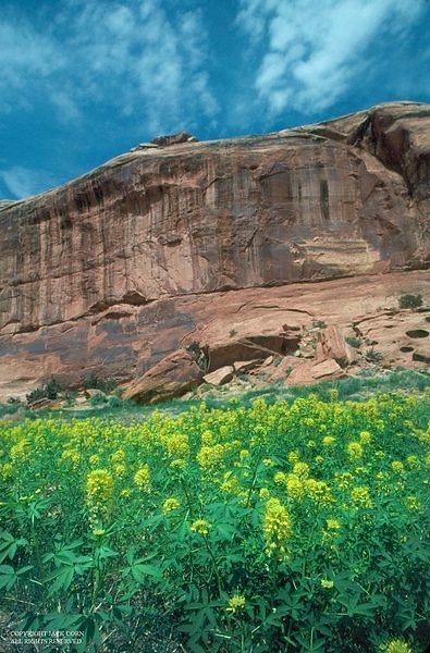 Red Utah cliff with wildflowers