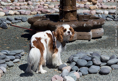 Dog Days of Summer Labyrinth Walk