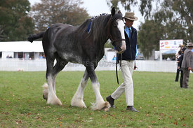 HOY_220314_Clydesdales_2379