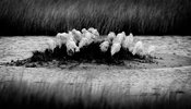 6554-Bird_Laurent_Baheux
