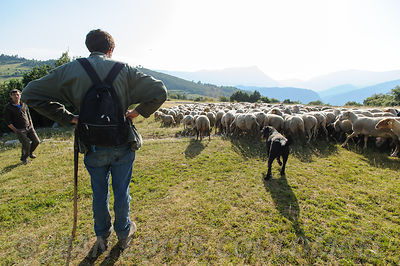 Transhumance à Courchons  photos