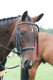 SI_Dressage_Champs_260114_406