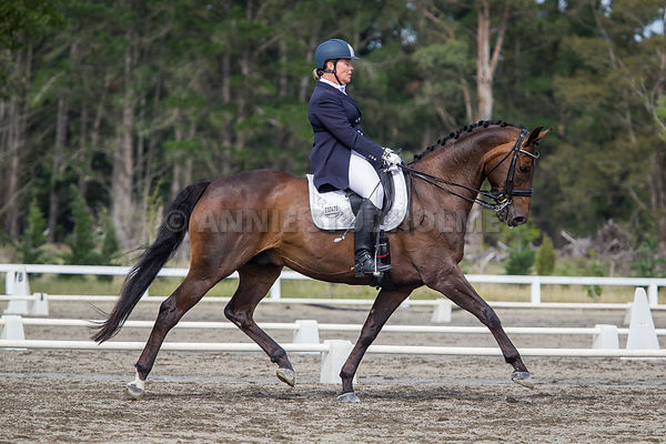 SI Festival of Dressage 2016 photos