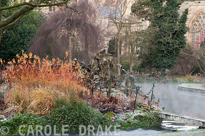Colourful stems of cornus mix with the skeletal remains of herbaceous perennials beside the Well Pool in the Bishop's Palace garden at Wells on a November morning
