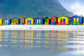 Single seagull standing on the beach in front of the iconic  colourful bathing huts reflected in wet sand, with Muizenberg mountain in background.