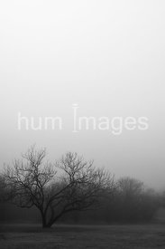 Black and white photo of a tree on a foggy morning