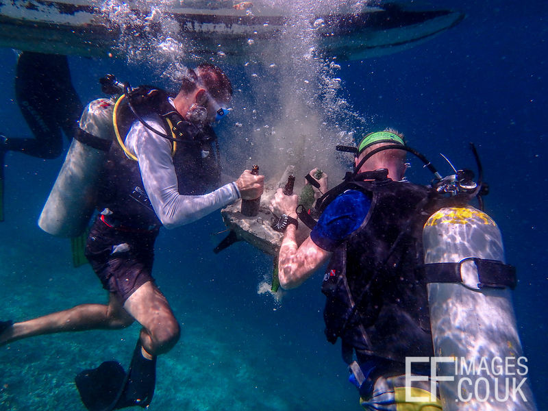 TRACC Dive Volunteers guide a Bottle Reef to the sea floor.