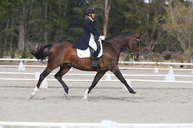 SI_Festival_of_Dressage_300115_Level_9_SICF_0455