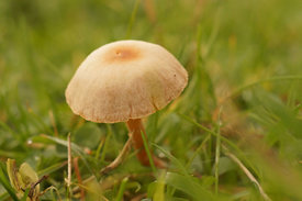 Fungi species, Zuidleie