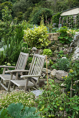 Seating area surrounded by aromatic and edible plants such as rosemary, squashes and tomatoes. The Shute, nr Ventnor, Isle of Wight, UK