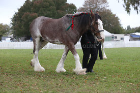 HOY_220314_Clydesdales_2380