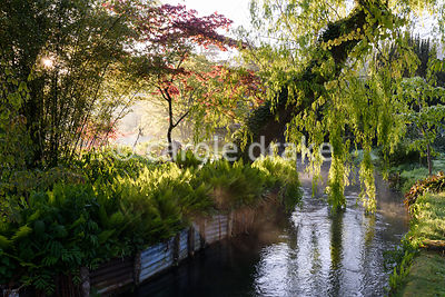 A weeping willow leans over a tributary of the River Avon in the Japanese garden at Heale House, Middle Woodford, Wiltshire on a frosty April morning