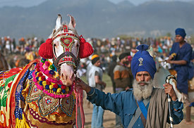A Nihang warrior with his beautifully decorated horse
