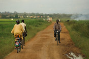 Cyclists cycling on path surrounded by fields of crops, near Mbale, Uganda Africa