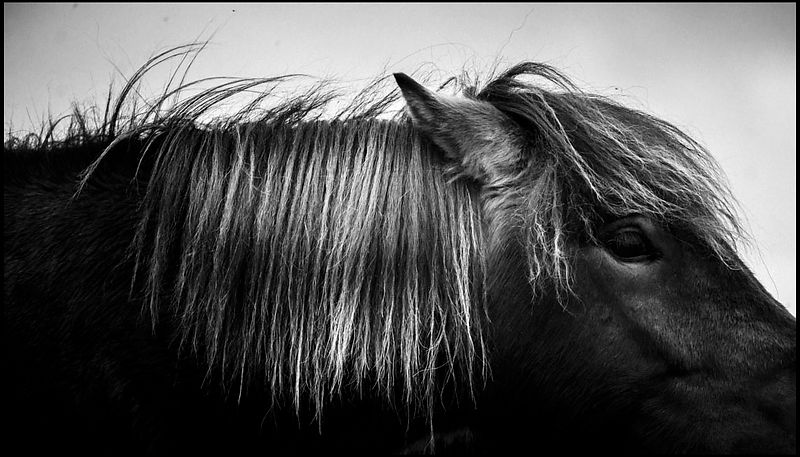 In my eyes, Wild horse of Iceland © Laurent Baheux