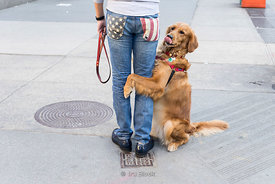 A dog sitting and holding a man's leg on the street in New York, USA.