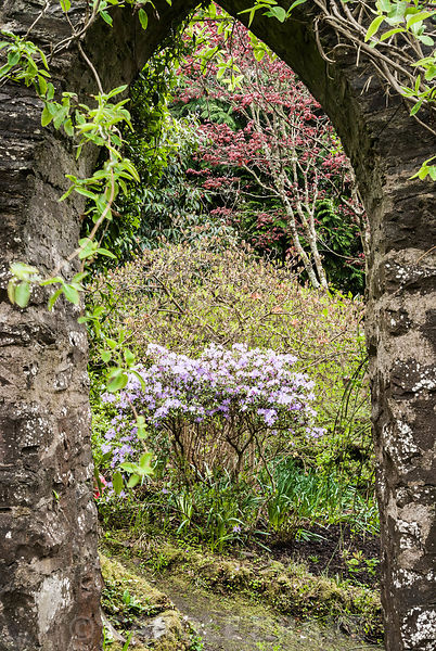 View through a pointed arch opening in the kitchen garden wall that leads into the first wood, with azaleas coming into flower and an acer showing new leaves. Greencombe Garden, Porlock, Somerset, UK