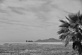 Leading horses across a beach