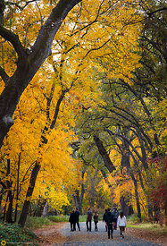 Fall Colors in Bidwell Park, Chico #9