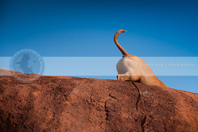 dog butt and tail disappearing down red clay hill under sky