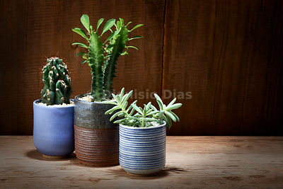 Decorative Vases of Succulents and Cactus