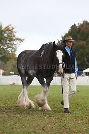 HOY_220314_Clydesdales_2381