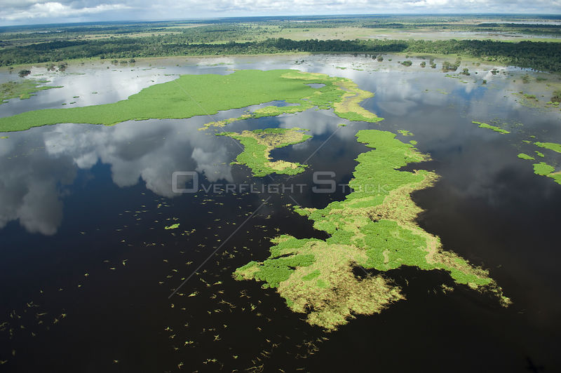 Aerial view of floating meadows of grass in the Beni floodplain during the summer 2008 flood of the Mamoré River. South of Trinidad city, Beni Department, Northwestern Bolivia.