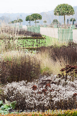Box edged beds framing the central path through the Italian garden are full of bleached seedheads and faded grasses including asters, Phlomis russeliana and sedums, with Versailles planters containing clipped Portugese laurels, Prunus lusitanica. Trentham Gardens, Trentham, Stoke-on-Trent, Staffordshire