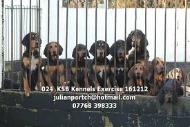 024__KSB_Kennels_Exercise_161212
