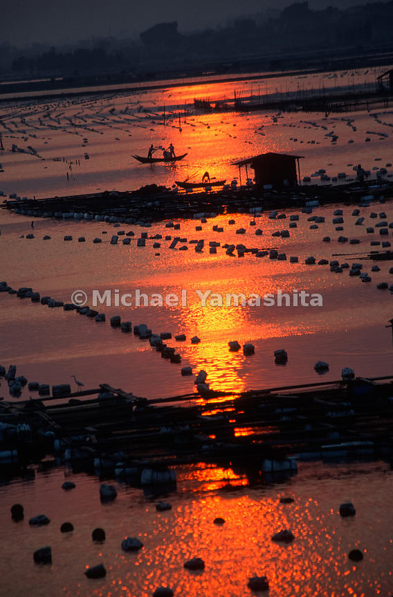 Fish farms and oyster beds at sunset. .Xiamen, China
